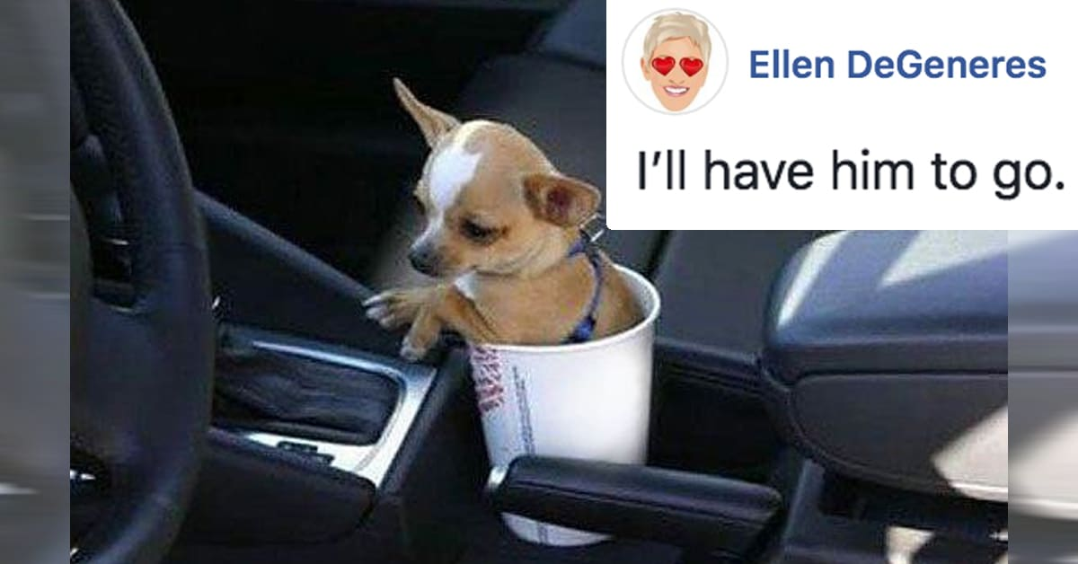 Ellen Degeneres Cat And Dog Captions Put Fun Spin On Fans Pet Photos