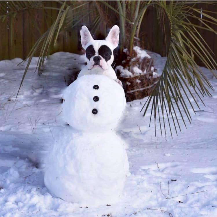 Ellen DeGeneres Creative Pet Captions Dog Captions instagram Captions About Dogs Instagram Captions for Dogs