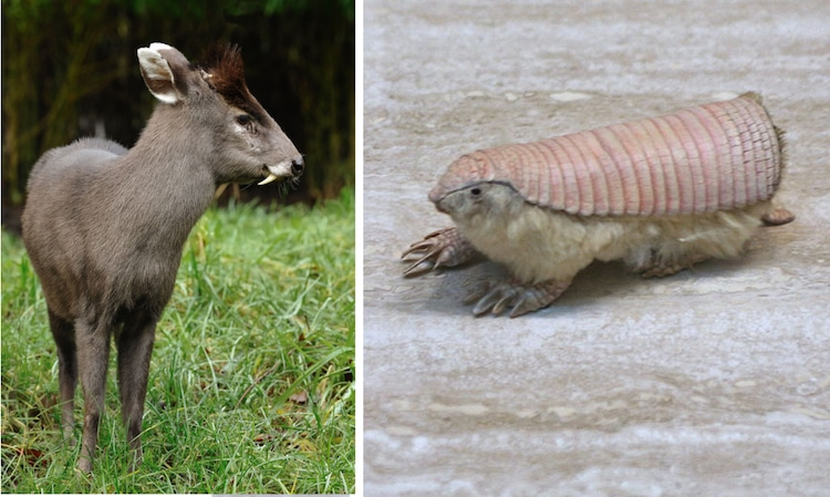 weird animals did you know these unusual animals existed