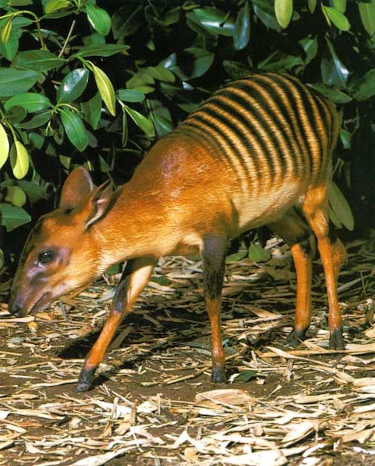 Weird Animals Unusual Animals Tall Animals Small Deer Like Animal Armadillo Like Animal
