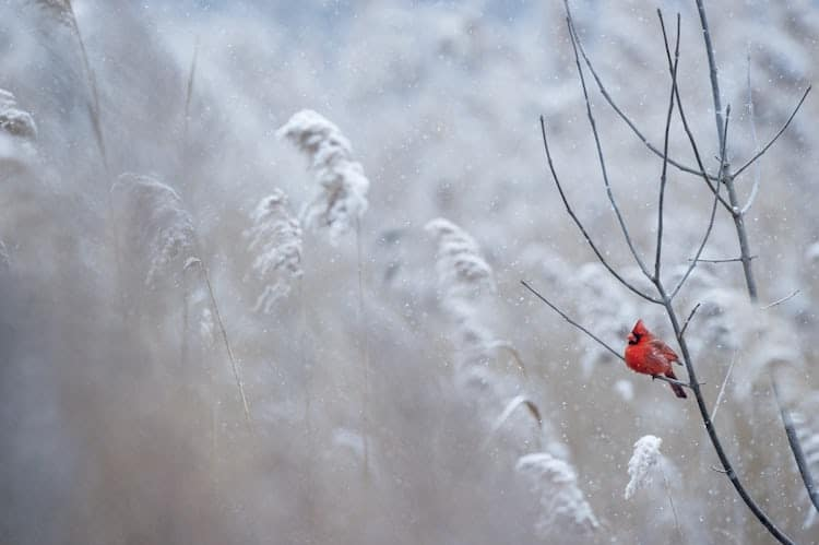 fotografias de navidad