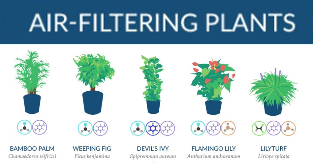 Nasa has compiled a list of the best air cleaning plants for Air filtering plants