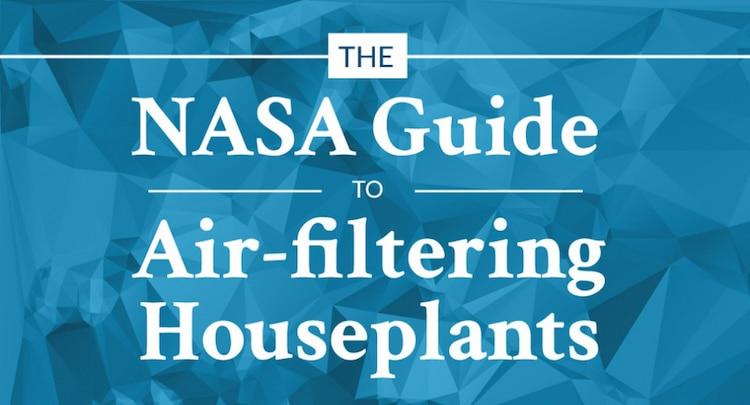 NASA House Plants