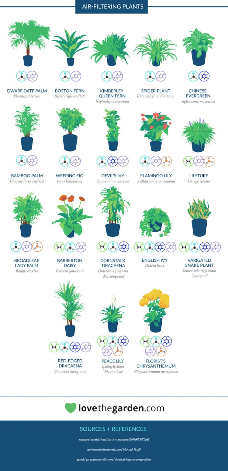 NASA House Plants