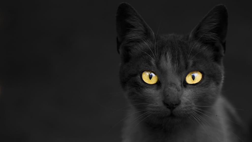 Картинки, картинки черная пятница с котом