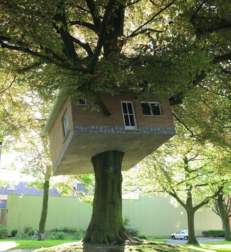 House Stuck In Tree Outside Senior Citizens Clubhouse
