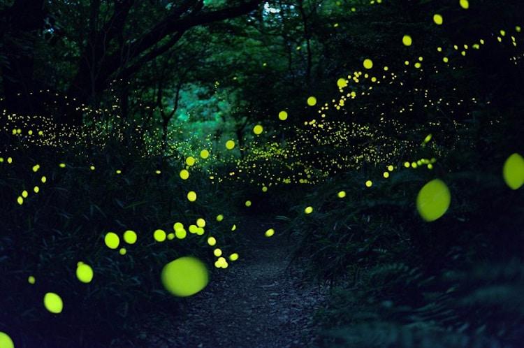 2016-summer-firefly-2