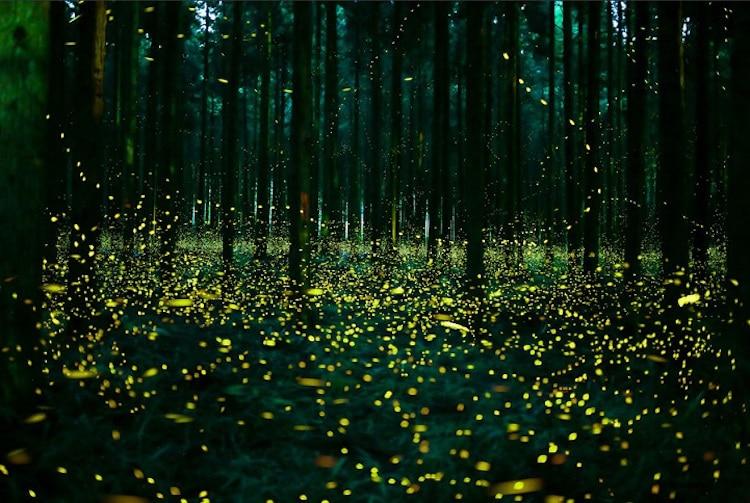 2016-summer-firefly-6