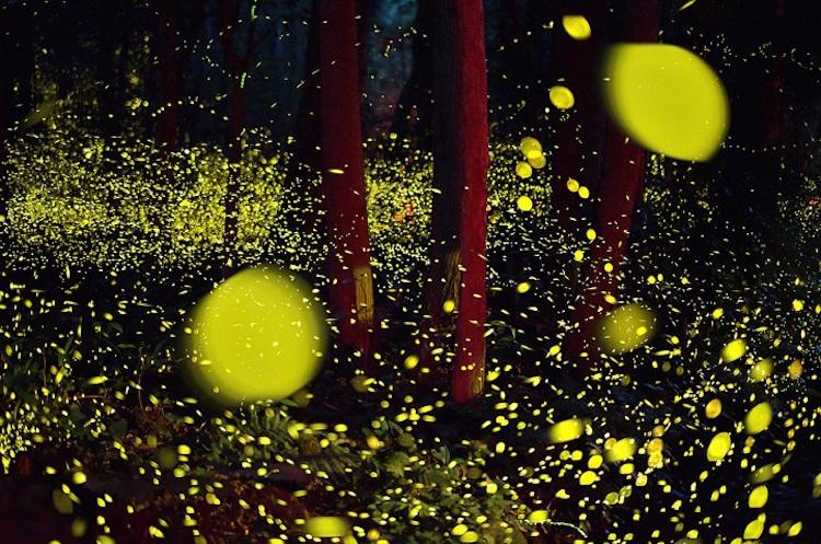 2016-summer-firefly-8