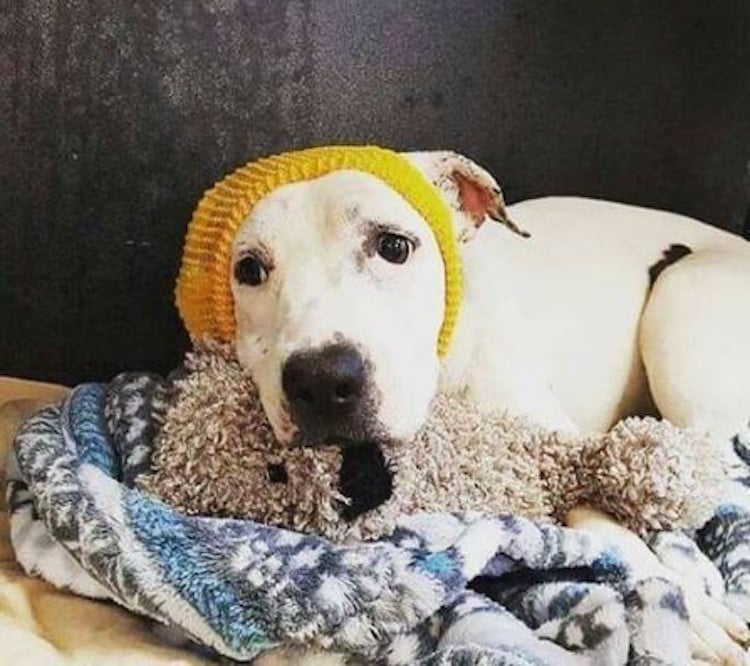 abigail rescue dog with hats