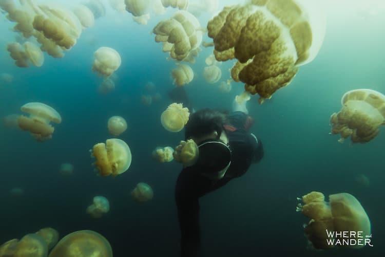 palau-jellyfish-lake-kien-lam-2