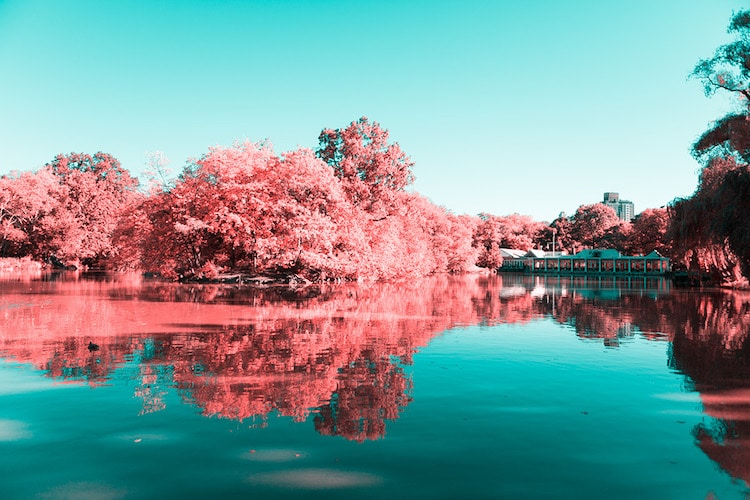 infrared photography central park paolo pettigiani