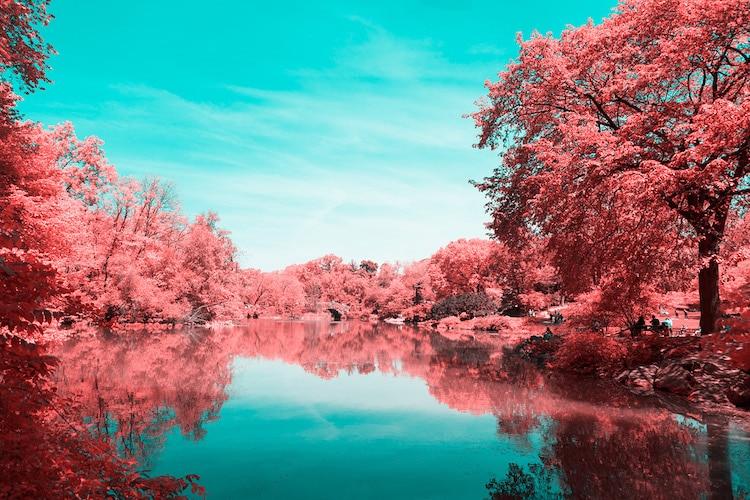 infrared photography central park paolo pettigiani