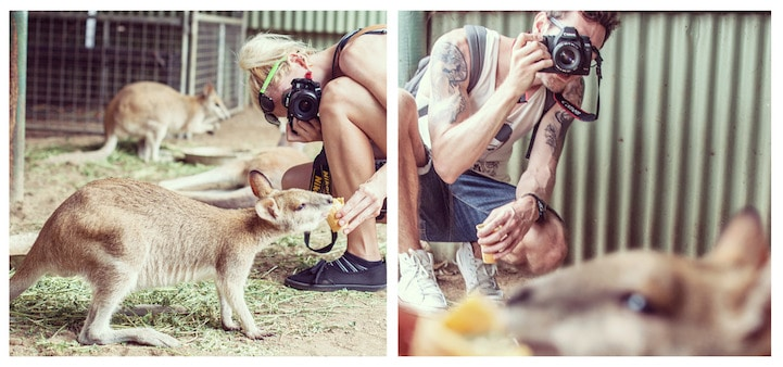 Featherdale Wildlife Park, Australia