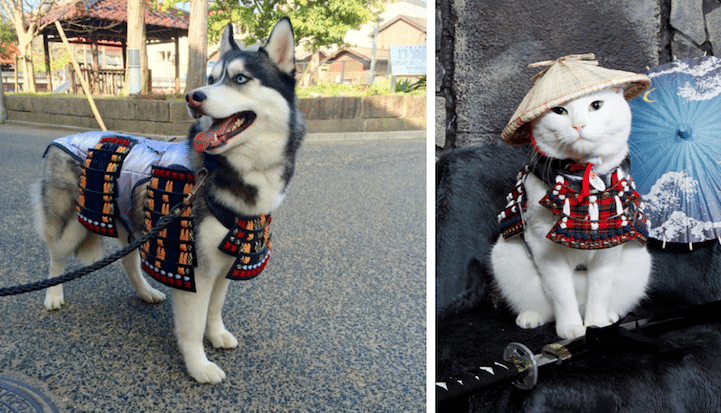 Japanese Store Designs Specially Made Samurai Armor For Cats And Dogs