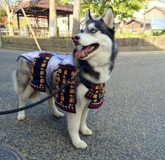 samuraipet4