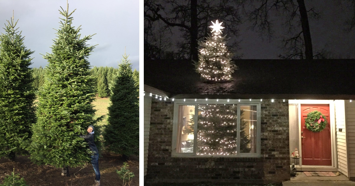 Christmas Tree Cleverly Looks Like It S Bursting Through