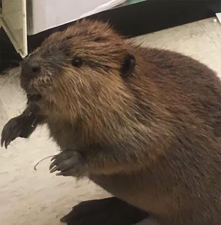 beaver-dollar-store-christmas-tree-shopping-5