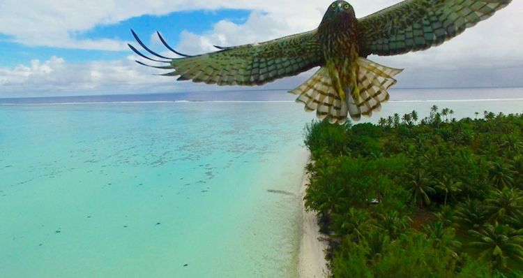 Best drone photos of 2016