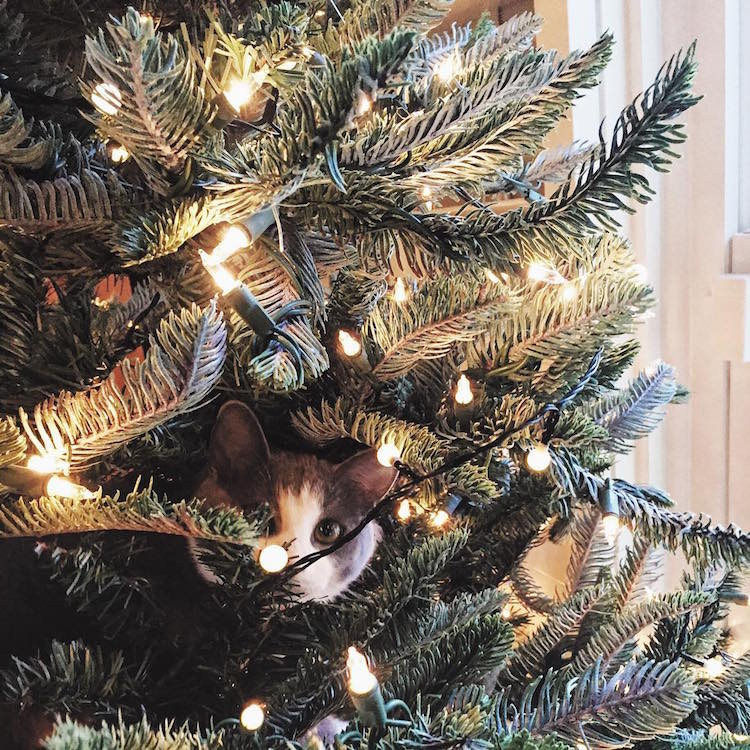 Cats Christmas Trees