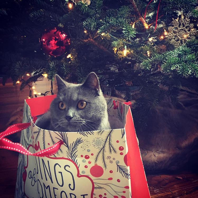 Christmas Cats of Instagram