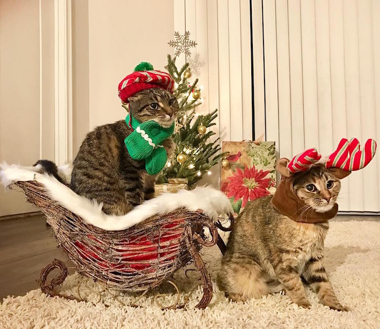 Cat Christmas.Christmas Cats Of Instagram Celebrate Social Media S Festive