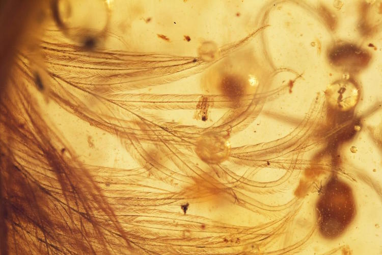 dinosaur tale amber feather