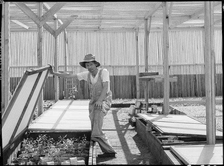 dorothea lange japanese internment camps