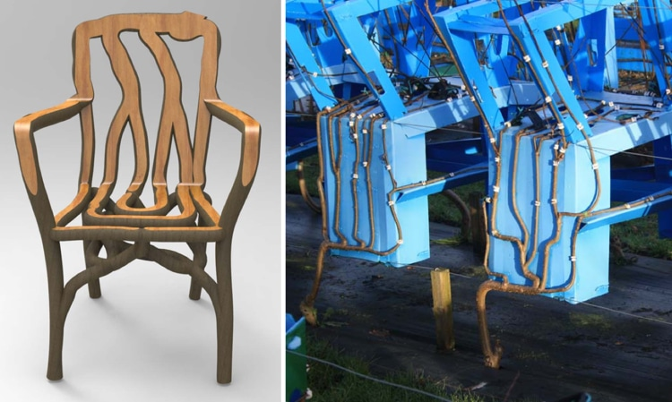 full grown gavin munro tree furniture