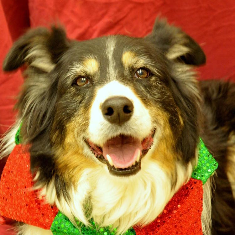 Humane Society of the Pikes Peak Region Animal Shelter Christmas Adoptions