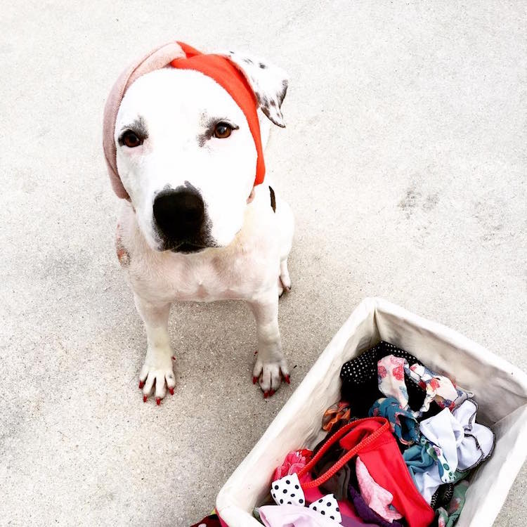 Read more:Recovering Rescue Dog Keeps Receiving Hats From People Around the World