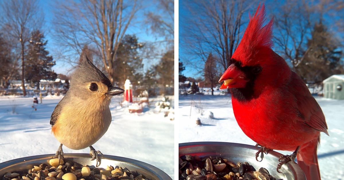 Bird Photo Booth Captures Fascinating Close Ups Of Birds