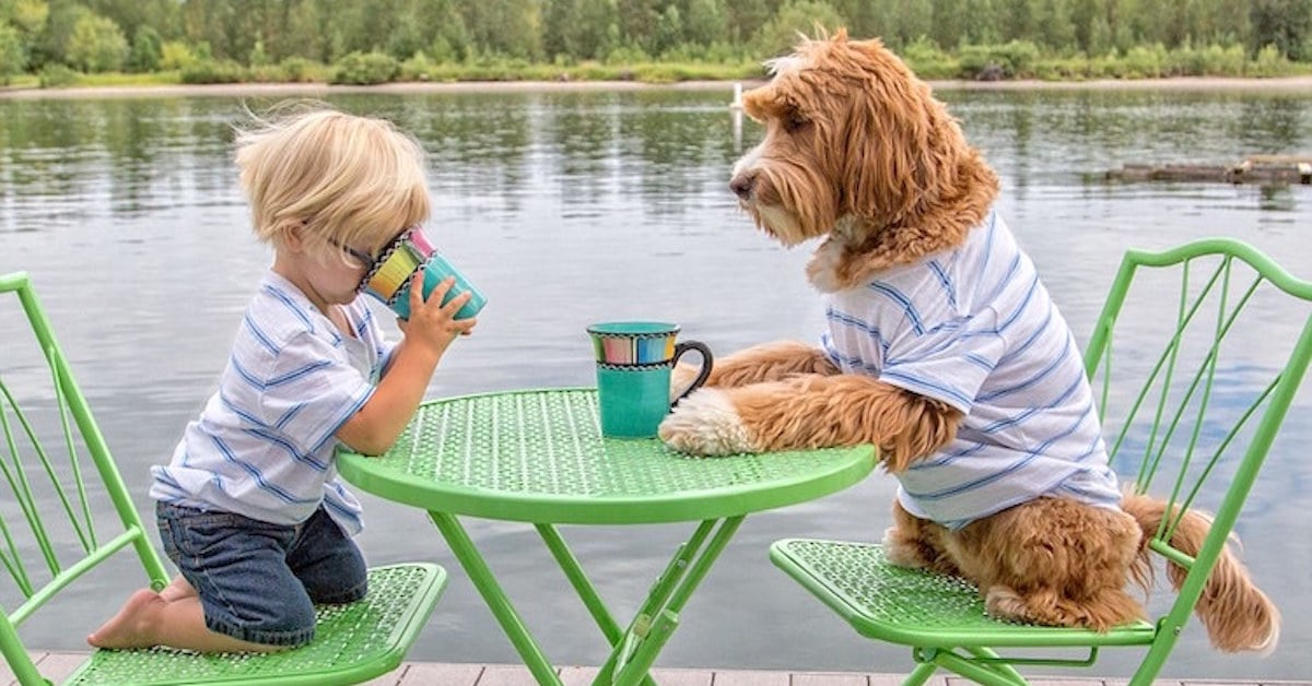 Year old boy forms adorable friendship with foster family s dog my
