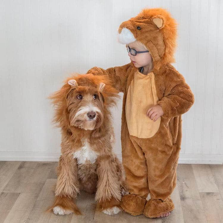 reagandoodle-dog-and-boy-17