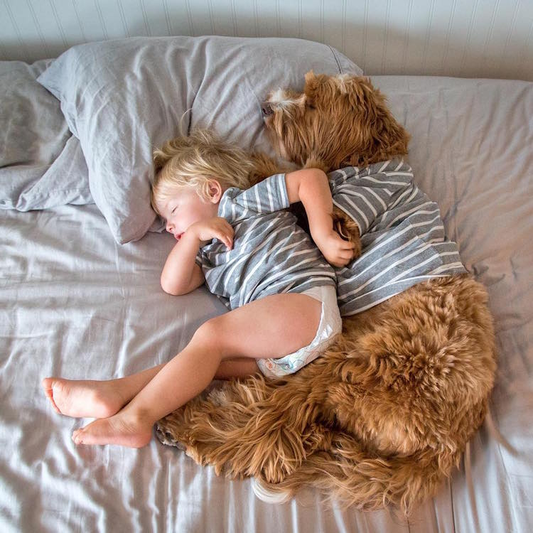 reagandoodle-dog-and-boy-6