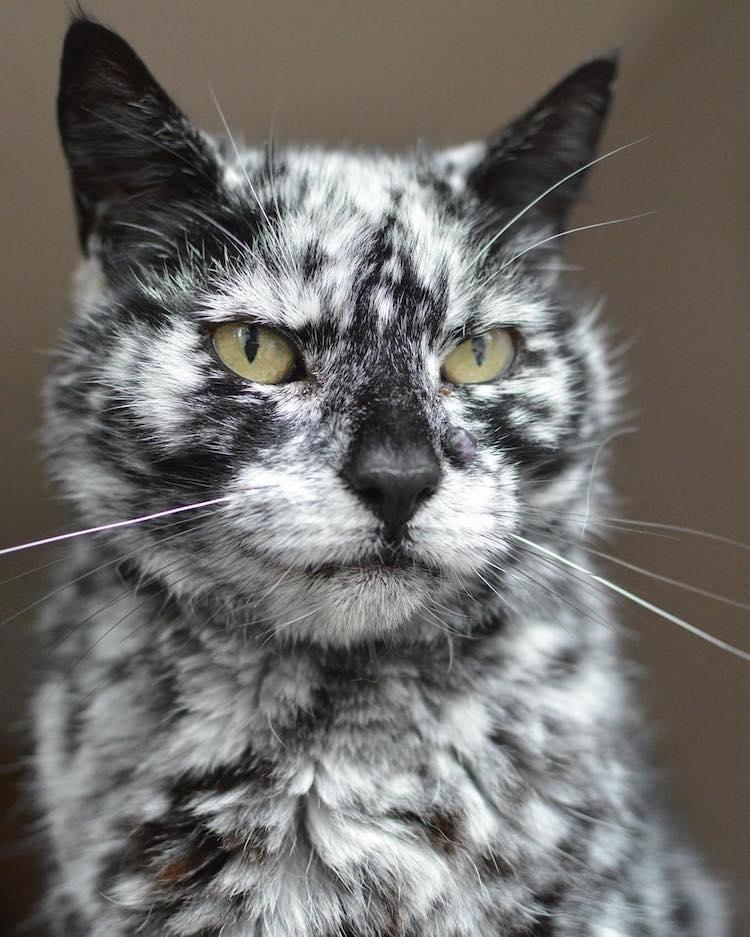 Scrappy the cat