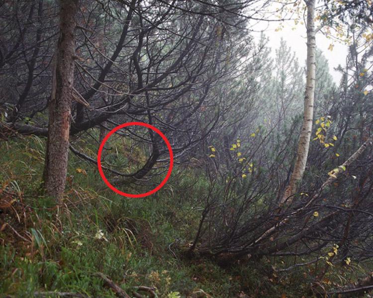 simon-menner-camouflage-extended-3