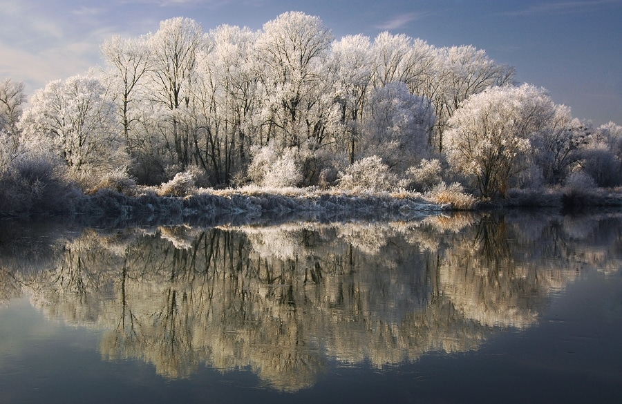 winter trees photography