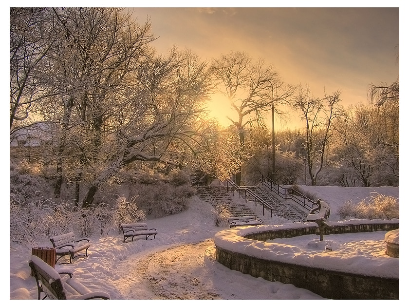 winter trees landscape photography