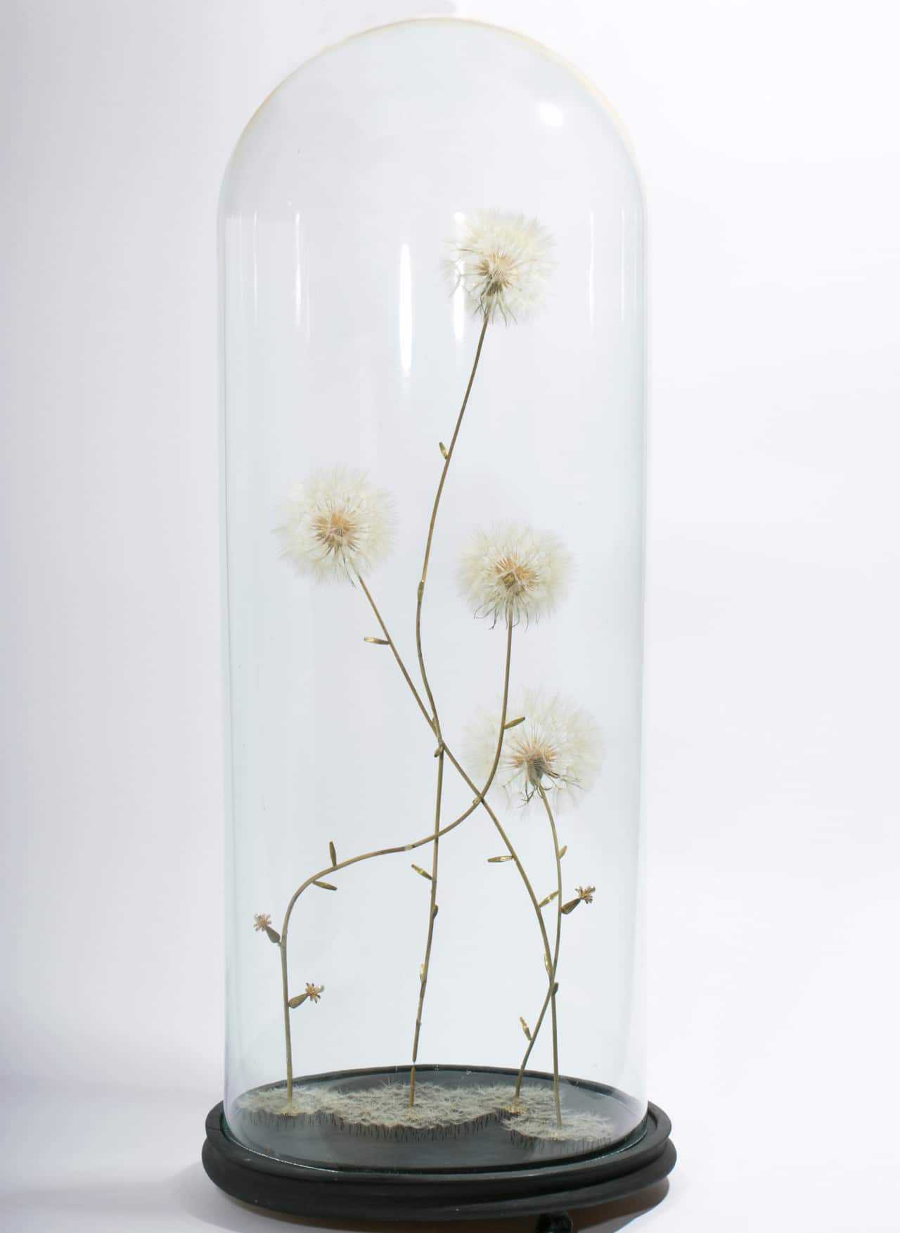 dandelion art Duy Anh Nhan Duc botanical artist sculpture