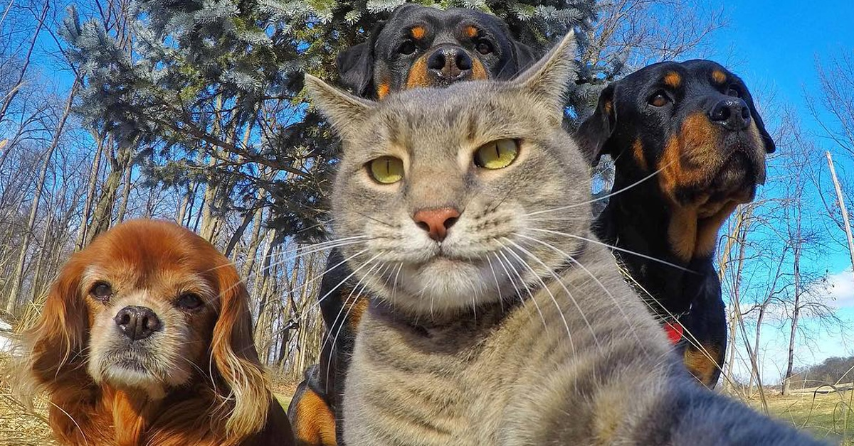 25 Animal Selfies Whose Picture Taking Is On Point