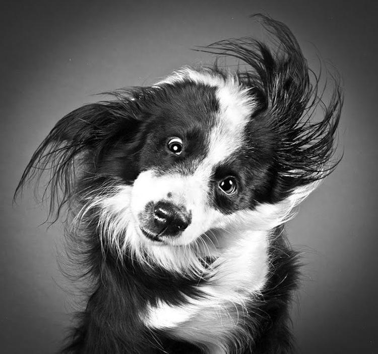 Carli Davidson Shake dogs in motion