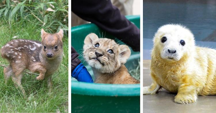 Cute Animal Tweet Off twitter zoos aquariums