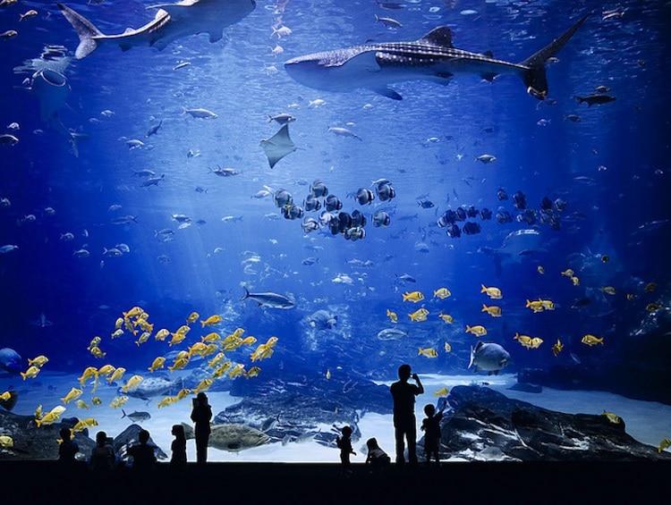 david hiepler fritz brunier georgia aquarium