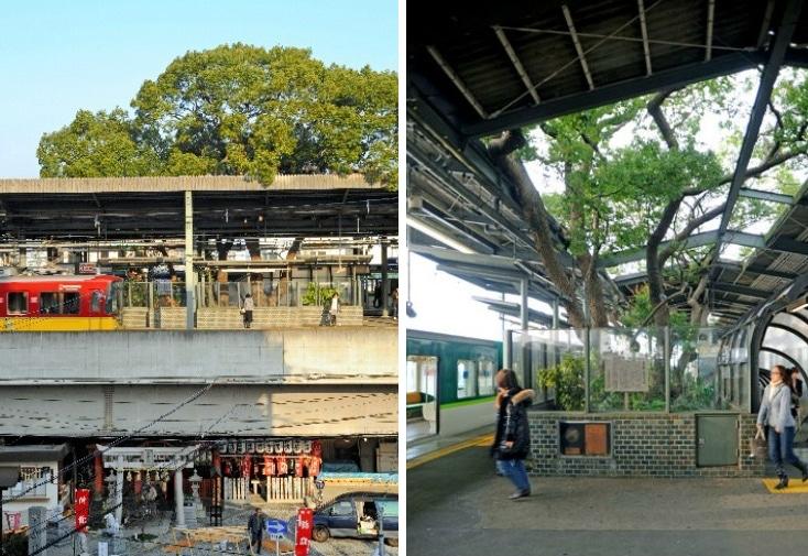 Kayashima Station osaka camphor tree