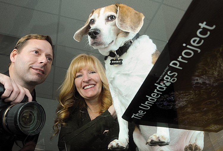 Jason Kenzie and Tania Ryan The Underdogs Project Photography Dogs
