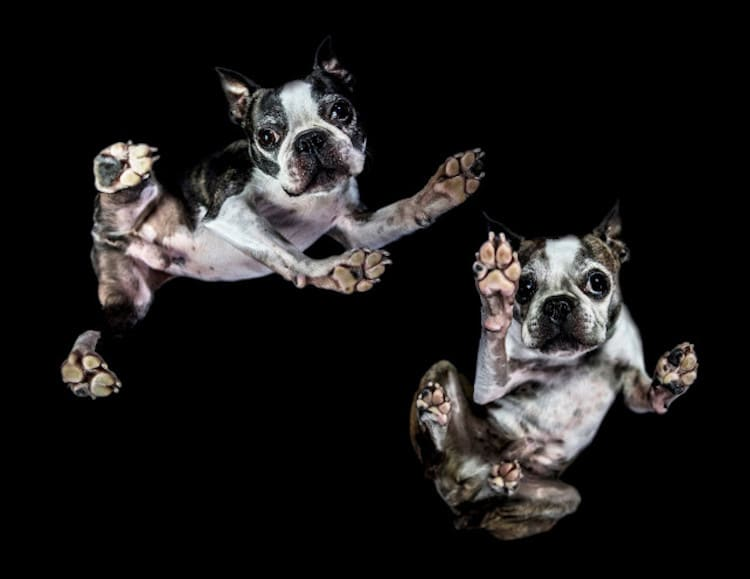 Jason Kenzie and Tania Ryan The Underdogs Project Photography of Cute Dogs From Below