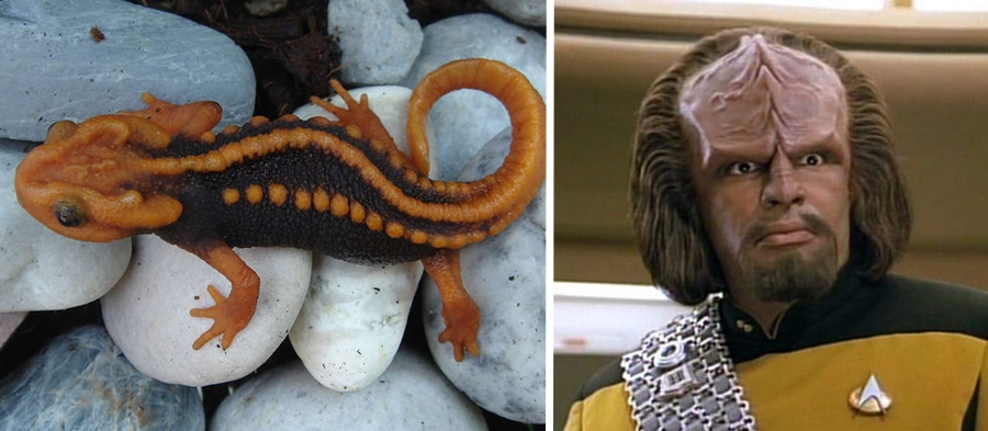 klingon newt new animal species