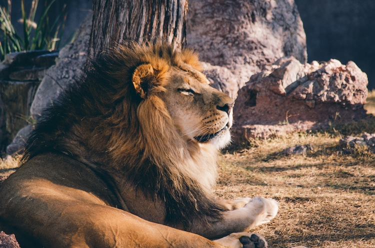 sleep animals sleep patterns michael breus