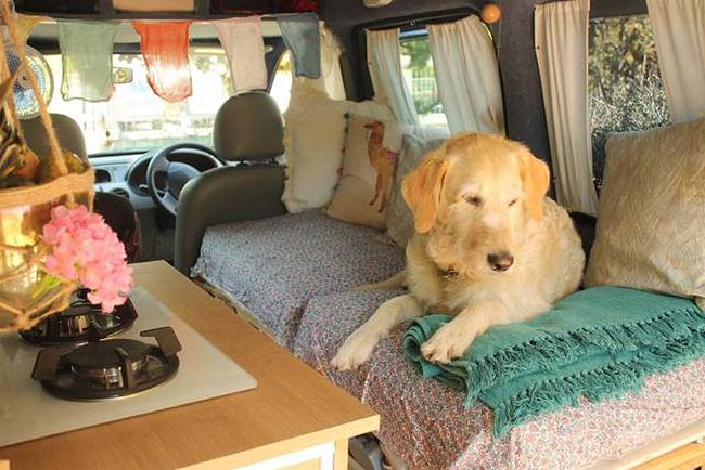 pamthevan91 pam the van restoration marina dog travel